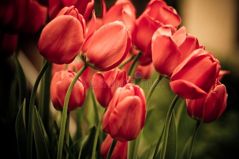 Flowers background stock photos