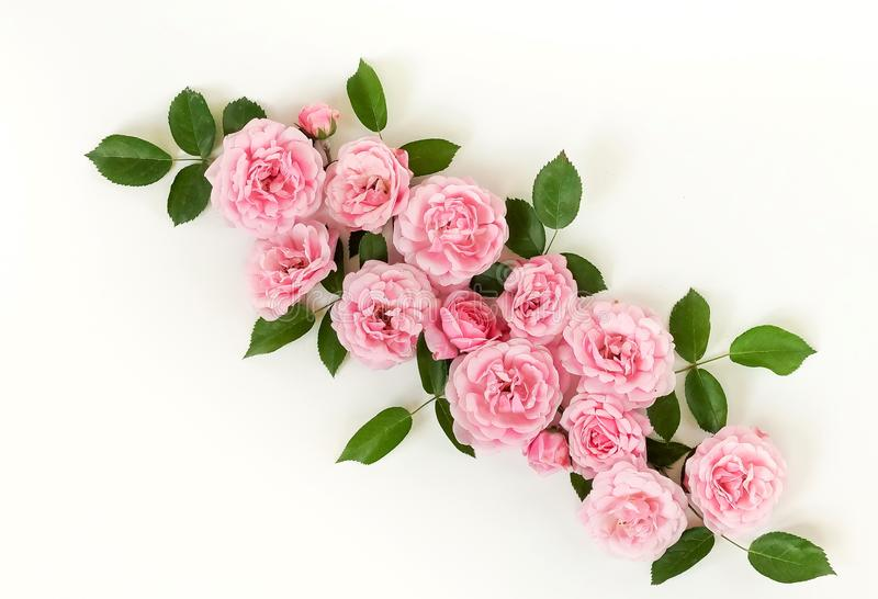 Flowers background. Beautiful pale pink roses frame on white background. royalty free stock images