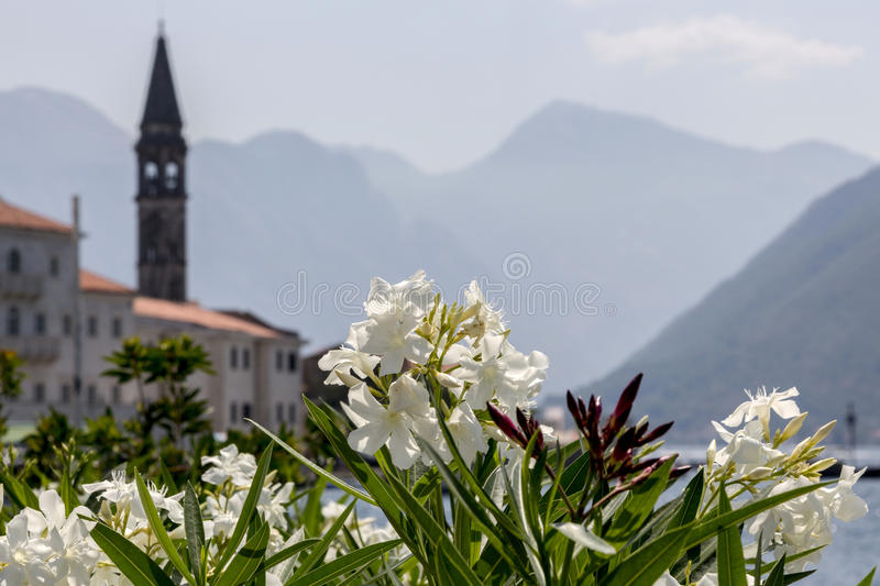 Flowers on the background of the bell tower of St. Nicholas Church in Perast stock images