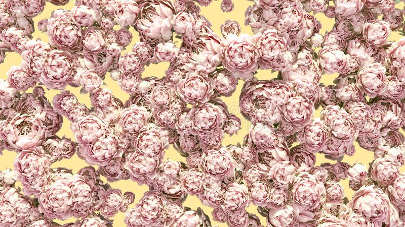 Flowers background colorful peonies clusters decoration pattern royalty free stock images