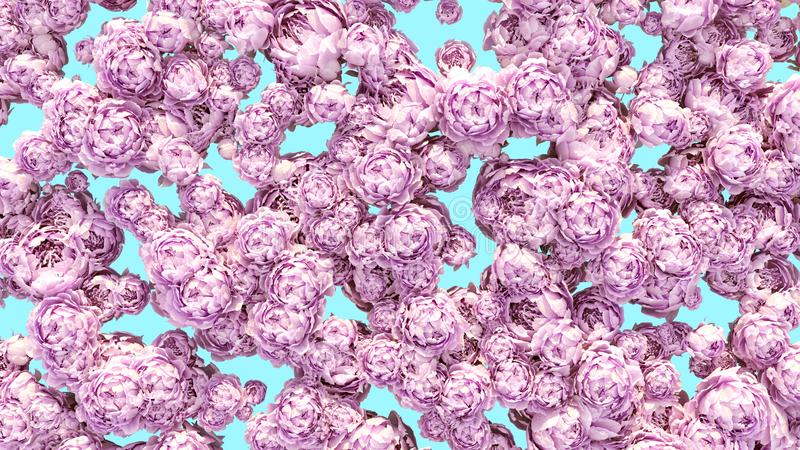 Flowers background colorful peonies clusters decoration pattern royalty free stock image