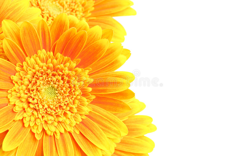 Flowers Background Isolated Stock Photography