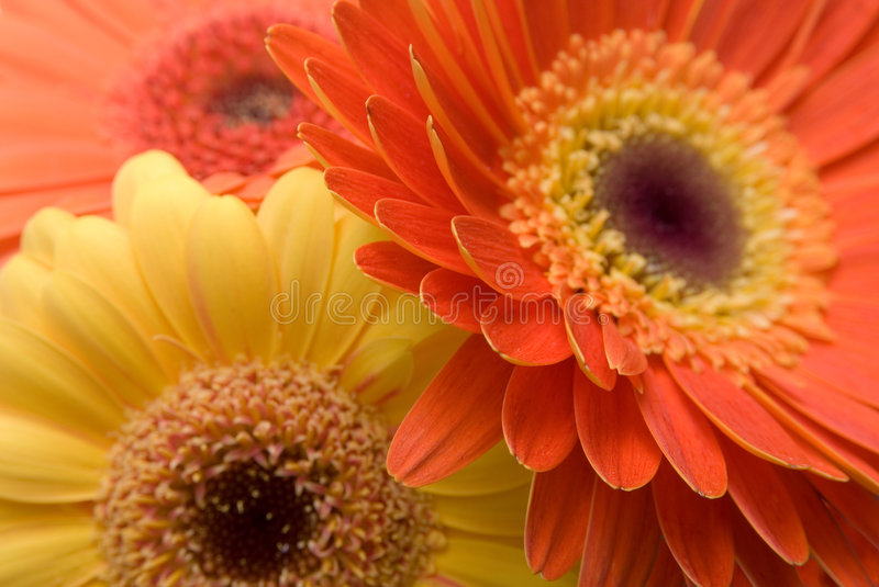 Flowers Background Texture royalty free stock image