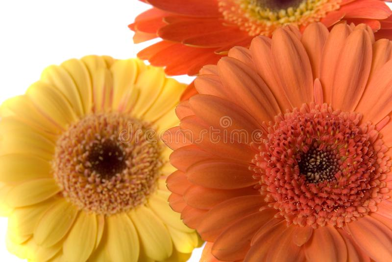 Flowers Background Texture stock image