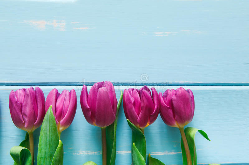 Flowers background, Violet tulips on blue wood, copy space stock image