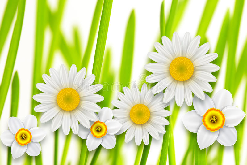Flowers background, stock illustration