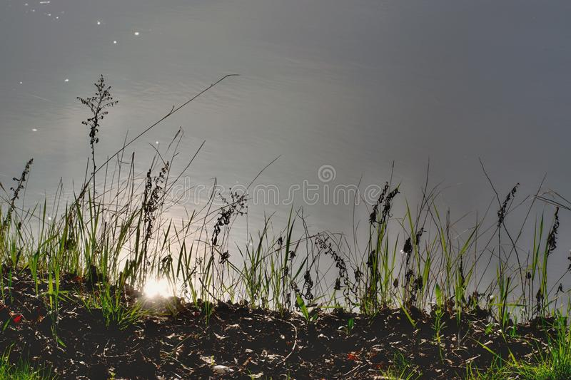 Flowers by the river. Flowers at the bank of the river. At river Váh - Slovakia stock photos
