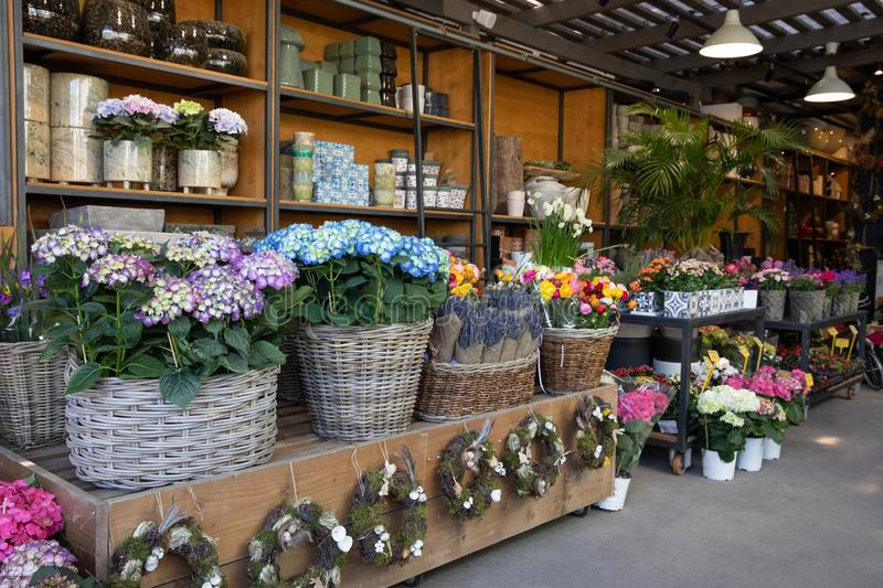 Flowers bar with variety of fresh beautiful flowers such as hydrangea macrophylla, lavender, persian buttercups and royalty free stock image