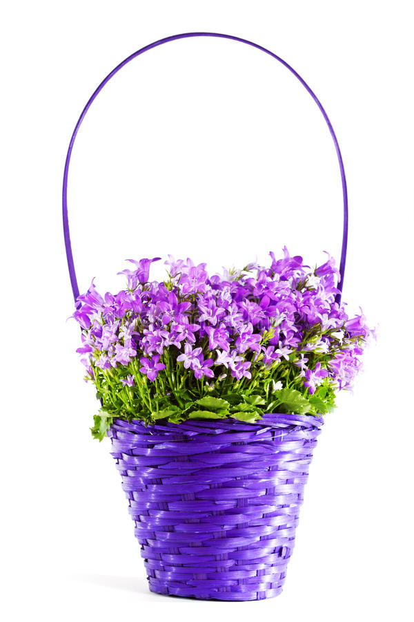 Download Flowers in basket stock image. Image of many, white, flowers - 18382055