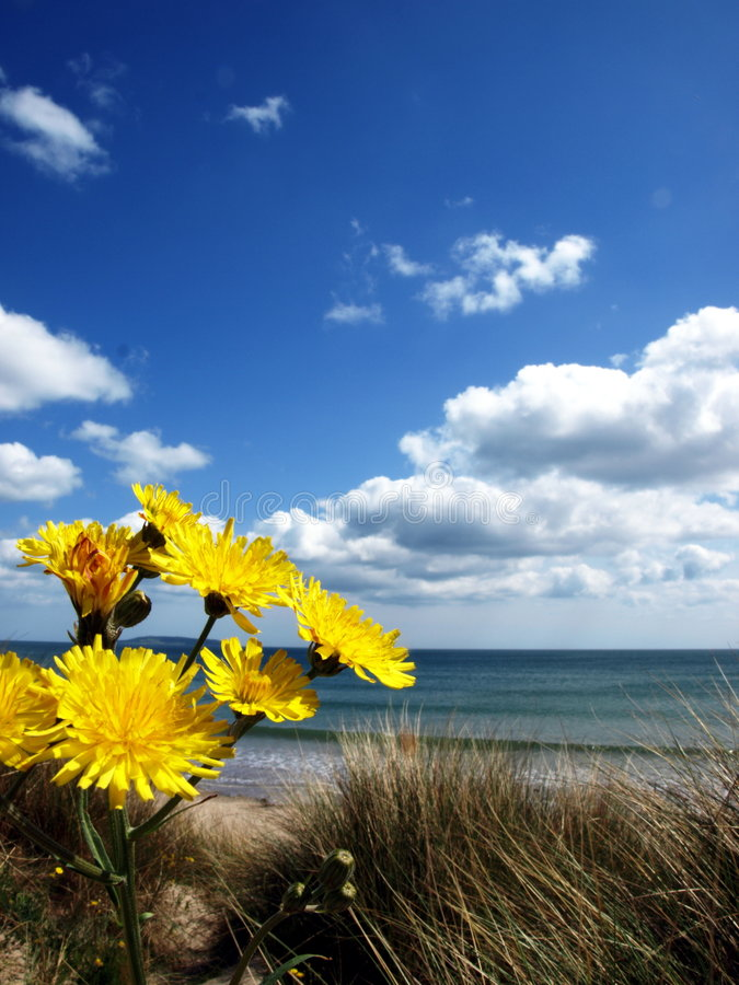 Flowers On The Beach Royalty Free Stock Photo