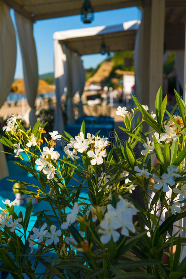 Download Flowers At Beach Restaurant Stock Photo - Image: 31874918