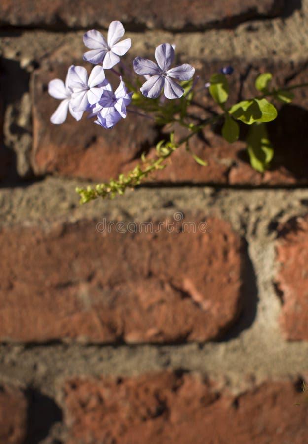 Flowers stock photo