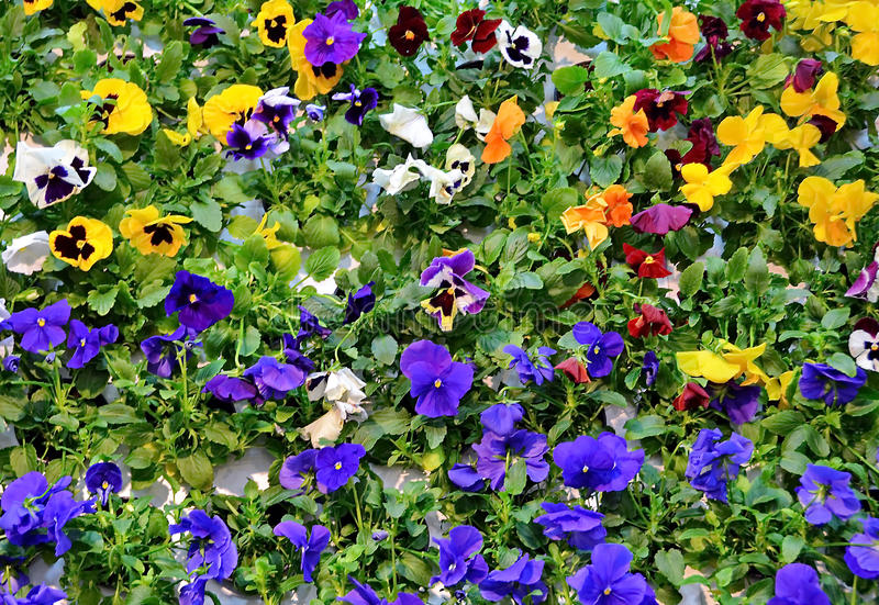 Flowers. Beautiful fresh flowers in the garden royalty free stock photo