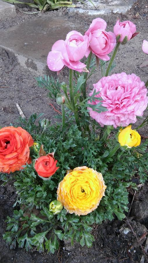 Download Flowers beauty stock image. Image of pink, yellow, flowers - 94641099