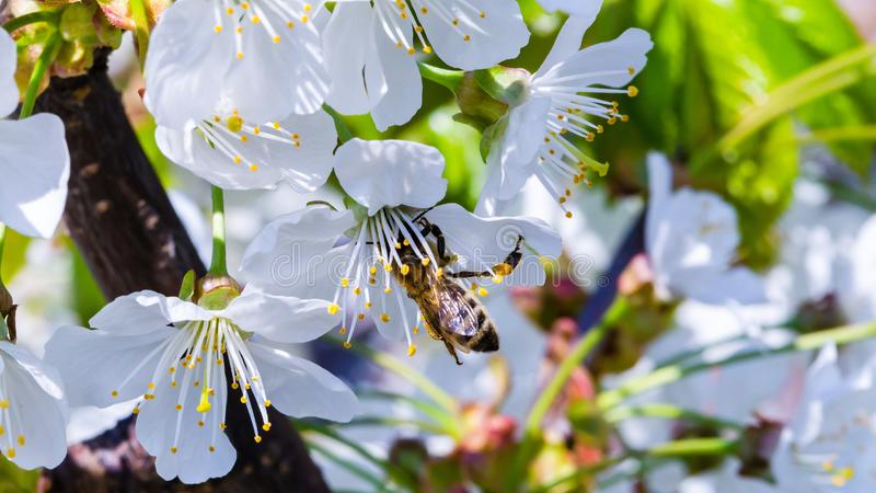Flowers and bee stock photography