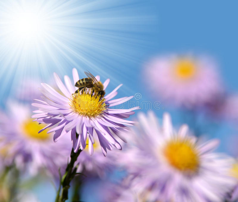 Flowers With Bee Royalty Free Stock Photos
