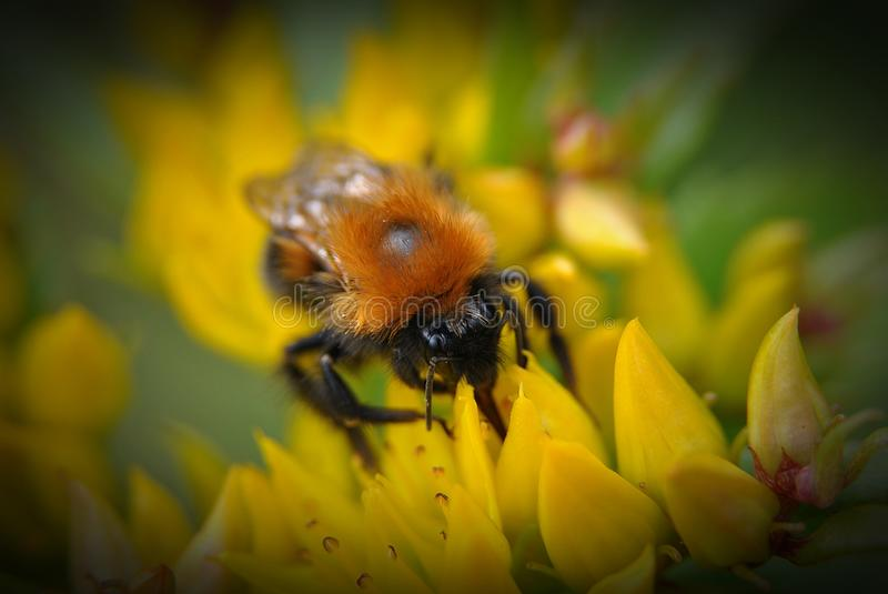 Flowers and bees stock photography