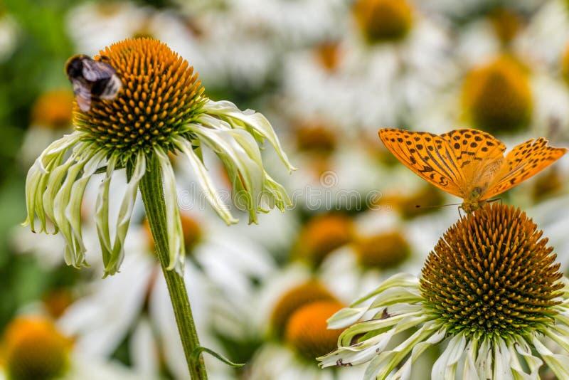 Flowers, bees and butterflies, Prague. Pruhonice garden stock photo