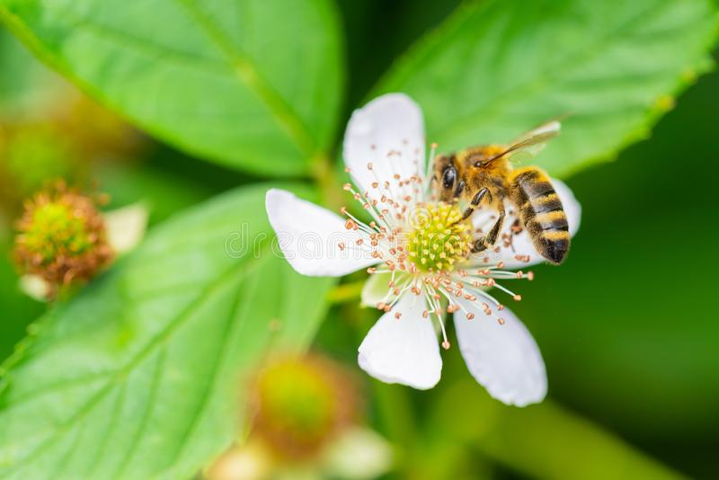 Flowers, bees and many other small creatures royalty free stock images