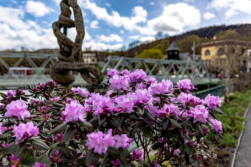 Flowers and Berkshires. Beautiful flowers with a rural Berkshires town in background royalty free stock images