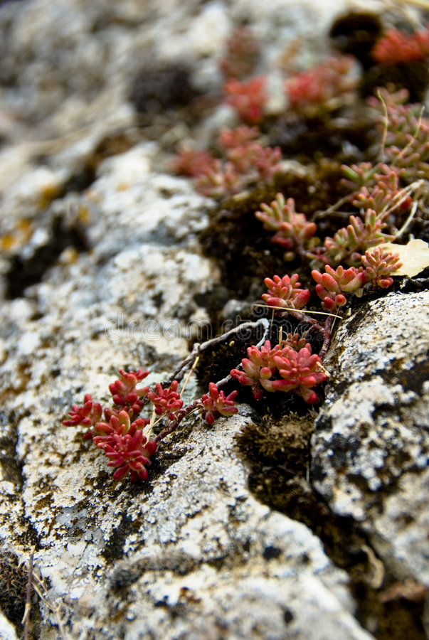Free Flowers Between Rocks Royalty Free Stock Photography - 3025377