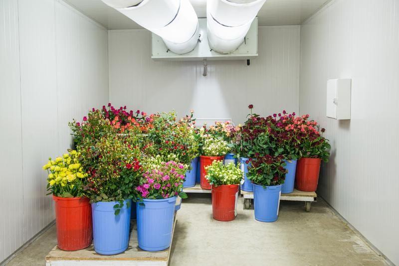 Flowers in storage stock photo