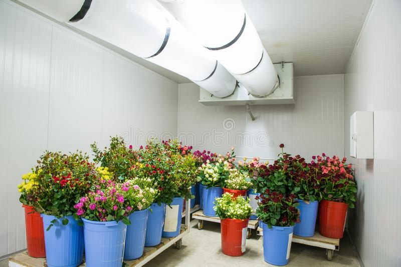 Flowers in storage royalty free stock photo