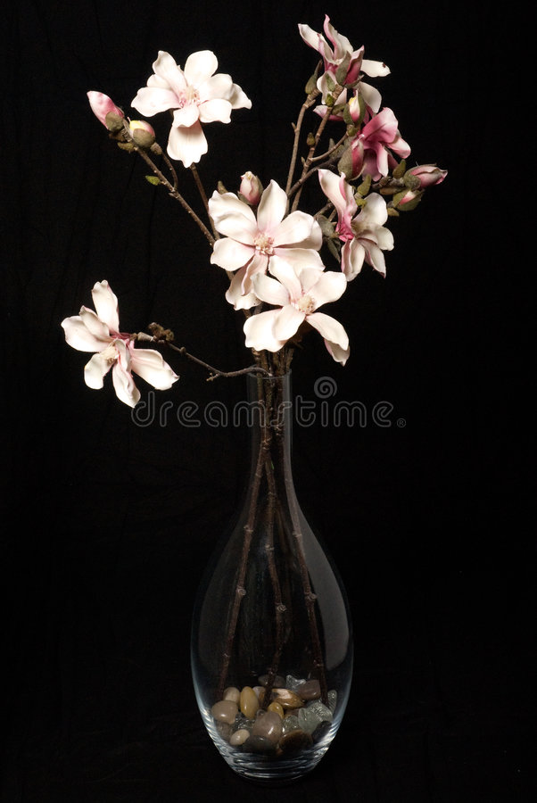 Download Flowers on black stock photo. Image of background, plant - 8019612
