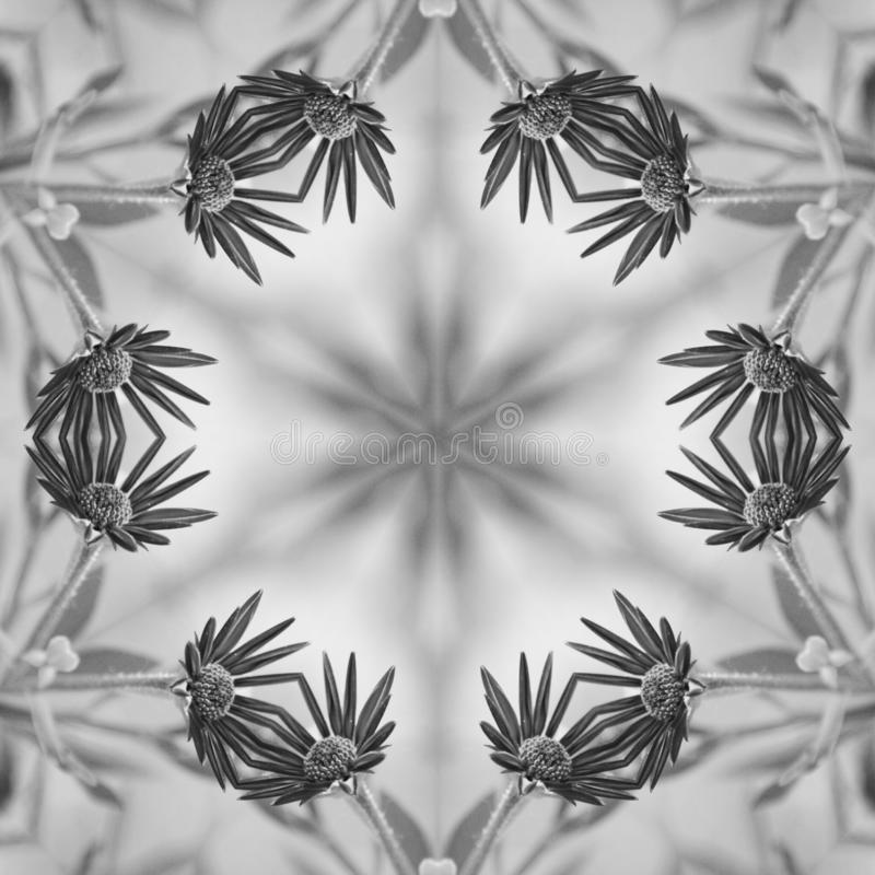 Flowers in black and white mandala royalty free stock photography