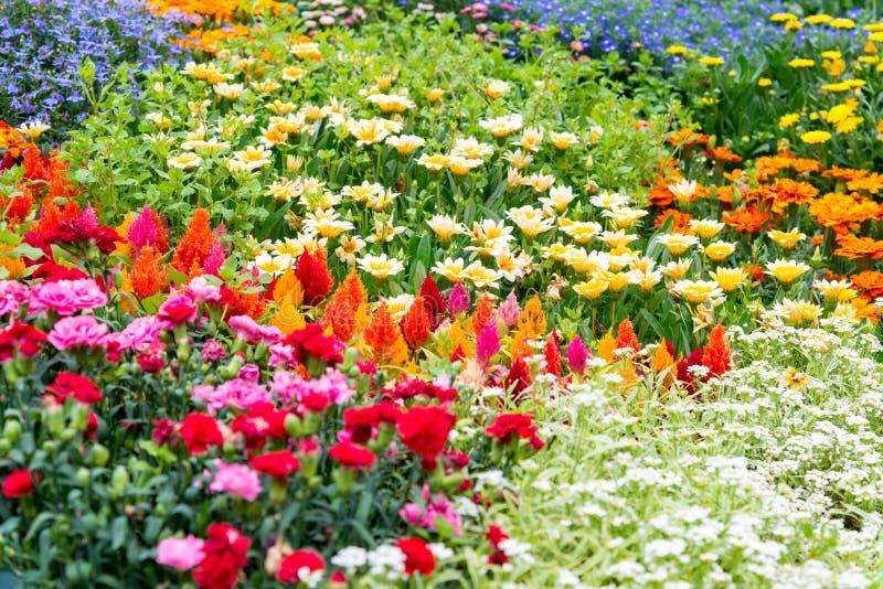 The Flowers Blooming In Garden Field. Flowers Garden Wallpaper ...