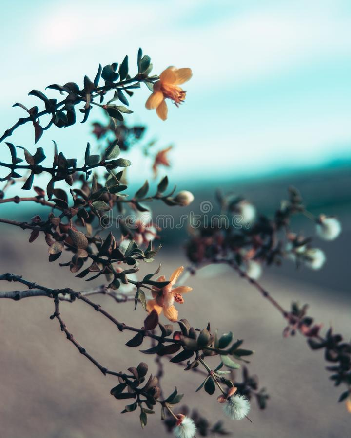 Flowers blooming in the harsh desert. royalty free stock photos