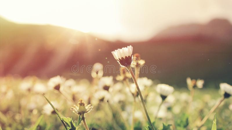 Flowers Blooming In Sunny Meadow Free Public Domain Cc0 Image