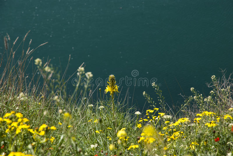 Flowers blossoming above the sea stock photo