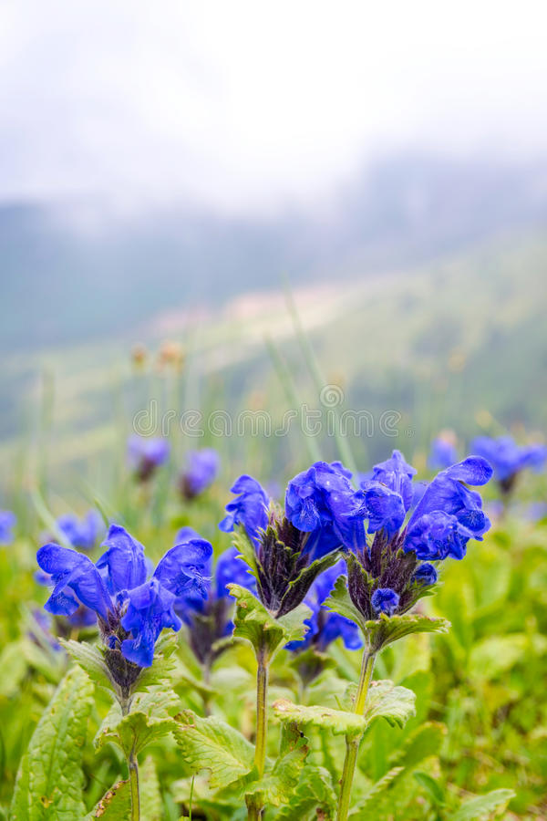 Flowers blossoming at Medeu, Kazakhstan stock photo