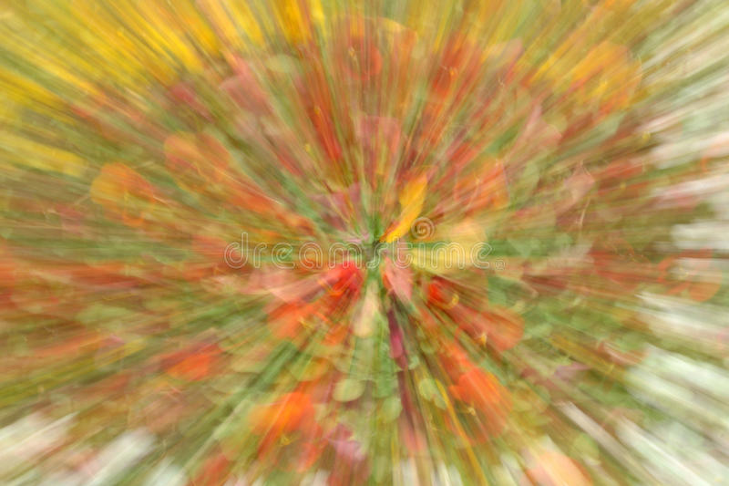 Flowers In Blur Ligh In Yellow And Red Stock Photo