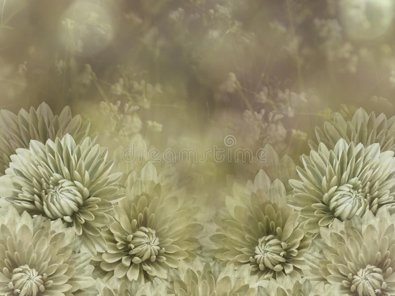 Flowers on blurry green-white background bokeh. white-yellow flowers chrysanthemum. Floral vintage composition. stock illustration