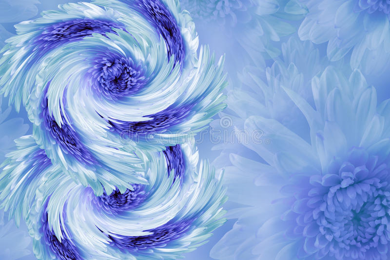 Flowers on blurry white-blue-turquoise background. Blue-white-violet flowers chrysanthemum. floral collage. Flower composition. stock photography
