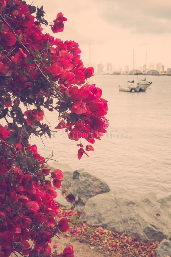 Flowers boats and San Diego skyline. Vintage flower and water scene with boats along scenic San Diego waterfront royalty free stock photos