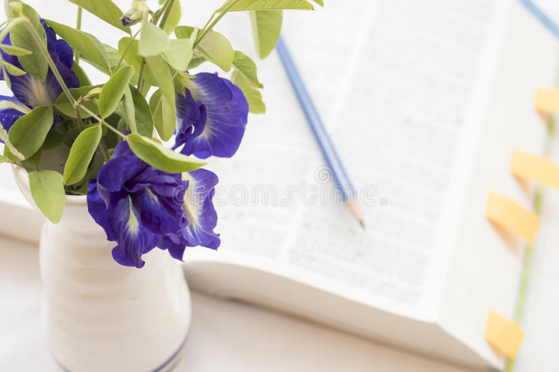 Flowers with book dictionary english for study. On white royalty free stock images
