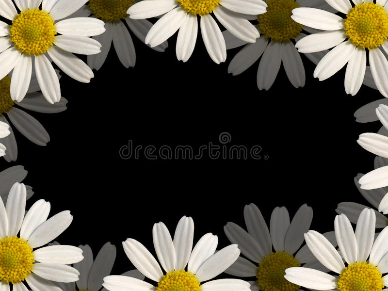 Download Flowers border stock illustration. Image of chamomile - 11063549