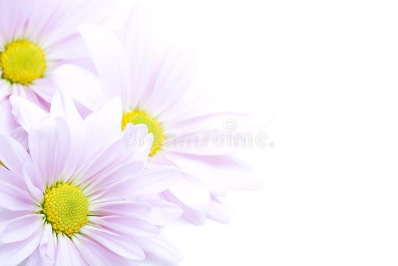 Flowers border royalty free stock photo