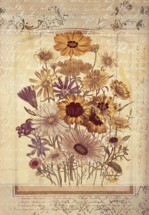 Flowers Botanical Vintage Style Wall Art with Textured Background vector illustration