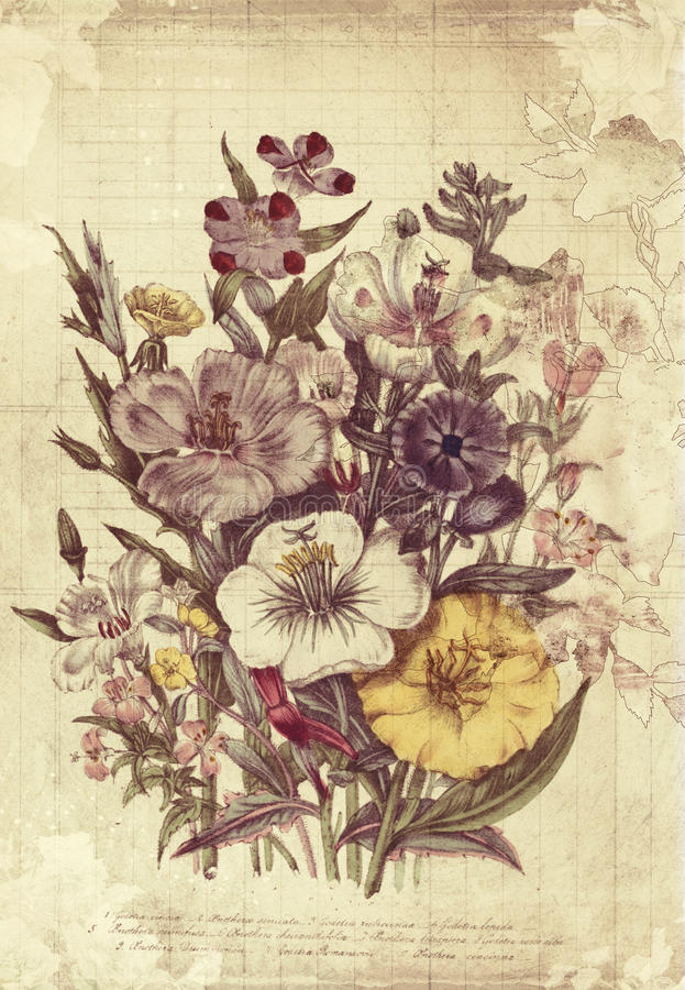 Download Flowers Botanical Vintage Style Wall Art With Textured Background Stock Illustration - Image: 30809013
