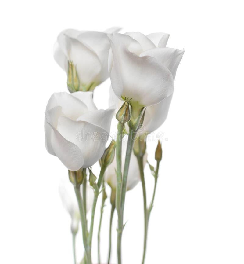 Download Flowers Bouquet(Lisianthus Flowers) Stock Image - Image: 21024871