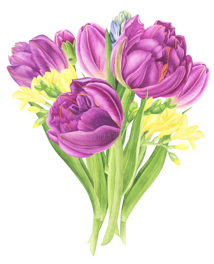 Flowers bouquet with tulips, freesia and hyacinths, watercolor painting. vector illustration