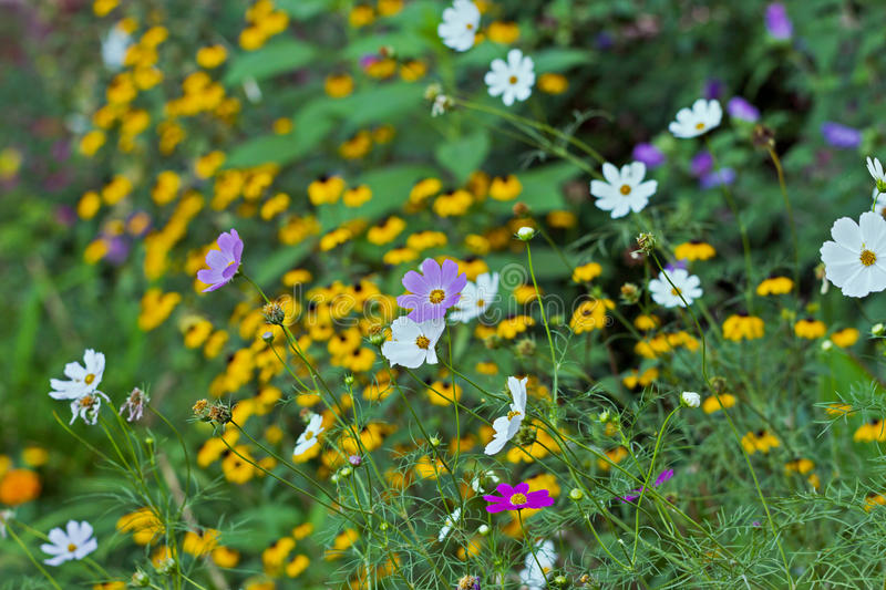 Download Flowers Royalty Free Stock Photo - Image: 33436575