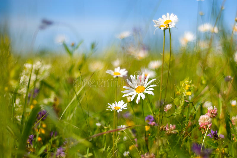 Flowers bright sunny summer day. stock images