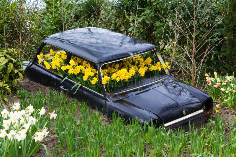 Flowers in the car spring. Summer sun green garden plant black stock image