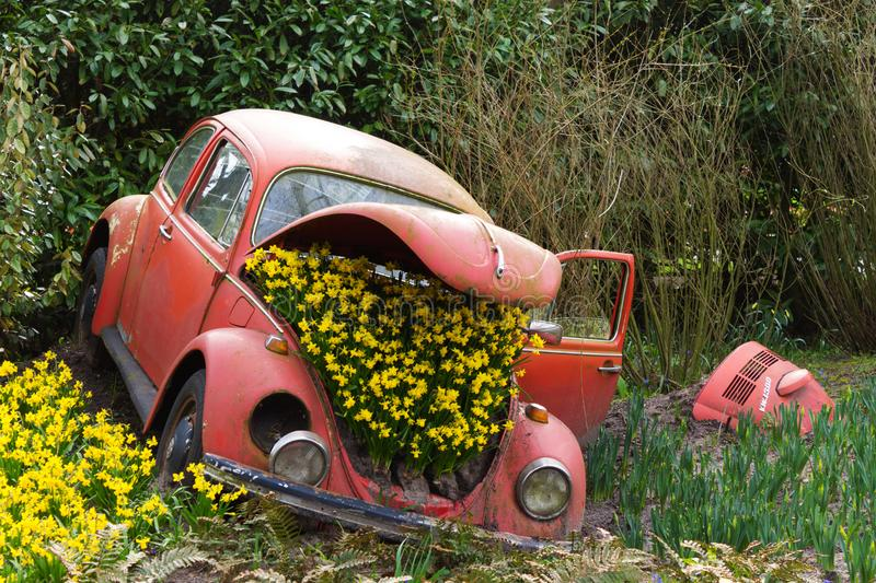 Flowers in the car spring. Summer sun green garden plant black red royalty free stock photography