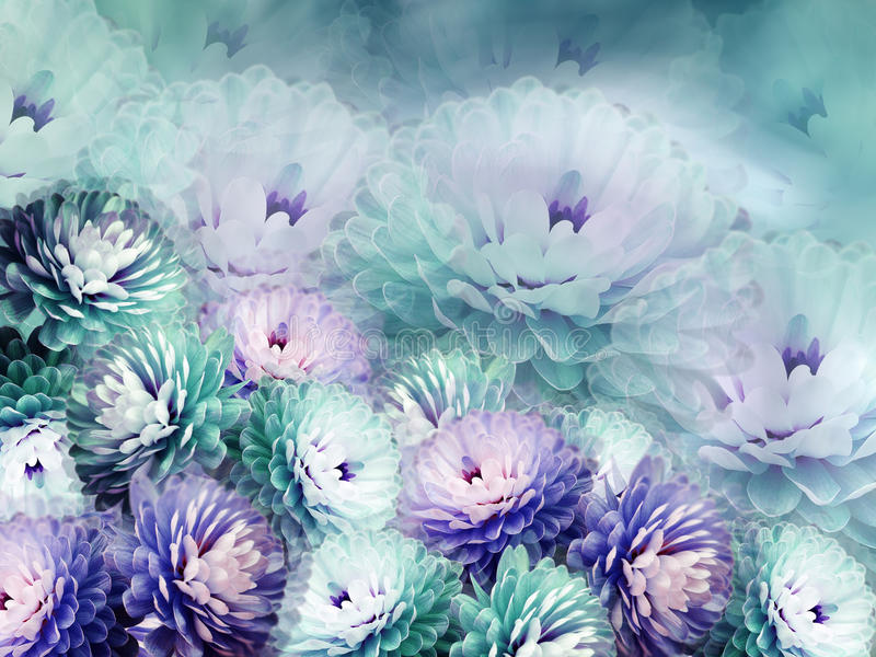 Flowers chrysanthemum on blurry background. turquoise-blue-violet background. floral collage. flower composition. Nature royalty free illustration